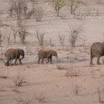 elephant parate dolomite camp Etosha namibia