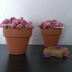 Flores de rizos pequeñas.