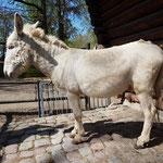 Die vermessenen Esel werden auch fotografisch festgehalten.