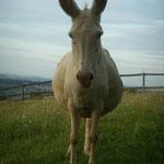 Esel von Familie Fellinger