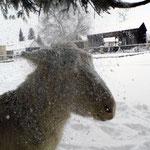 Esel von Familie Krassa