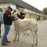 Herbsttagung 2014: Dr. Peter zechner vermißt Eselhengst.