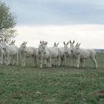 Tiere im Nationalpark Neusiedlersee-Seewinkel