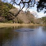 佐倉城址公園内の姥が池