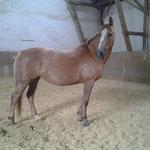 Schaila (Kinskypferd, Stute) *2001 | Schulpferd von 2013-2017