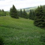 Fichtelberggebiet mit Zechengrund 12.6.2012