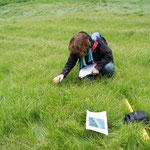 Vegetationsaufnahme im dichten Zittergrasseggen-Dominanzbestand