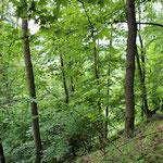 Laubmischwälder (besonders Eichen) prägen das Gebiet