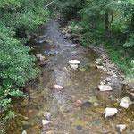 Die Preßnitz ist als naturnahes Fließgewässer als sog. FFH-Lebensraumtyp erfasst