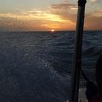 ... bis es dunkel wird und unser Boot uns wieder zurück bringt.