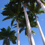 Herrliche Palmen vor der Schule...