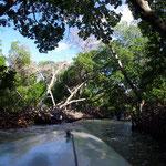 Bootstour durch die Mangrovenwälder...
