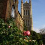Im Klosterhof blühen im Dezember sogar die Rosen...