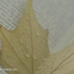 fotografo escritor, fotografias para escritores, fotografo libros, fotografo madrid, fotografo sentimientos, fotografo libros, libros bellos