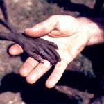 NOMBRE DE LA IMAGEN: Niño a punto de morir de hambre en Uganda. AUTOR: Mike Wens. AÑO: 1980.