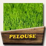 Réalisation pelouse