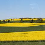 Auf dem Weg fuhren wir an ungezählten, sehr großen und intensiv gelben Rapsfeldern vorbei.