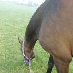 lecker Gras