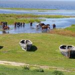 Die Pferde scharen sich um unseren Stellplatz, groß und kräftige Tiere - ganz andere Rasse als die gedungenen kleinen Mongolenpferde