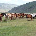 Pferde aller Stolz der Familie