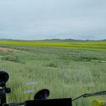 Grasland vor Ulaanbator