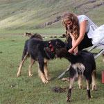 Alena besticht die Hüte- und Wachhunde mit Chappi