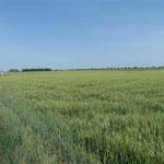 Endlose Landwirtschaft auf tiefschwarzer Erde.