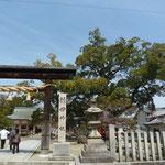法隆寺近くの龍田神社で大クス