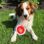 Bremen 2015 Erster mit einem vielversprechend und bester Junghund