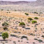 Spärliche Vegetation und doch schön