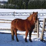 Ponys auf dem Peterbartl-Hof