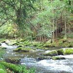 wildromantische Waldbäche