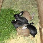 auf dem Peterbartl-Hof gibt es auch Kaninchen