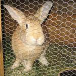 Unsere Kaninchen wollen gefüttert werden