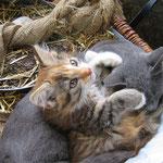 Unsere Katzen spielen gerne mit den Kindern