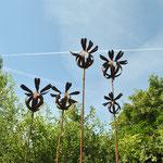 Papaverbollen (2 grootsten nog beschikbaar)