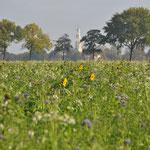 Ingezaaid veld - tussen Uithuizermeeden en Oldenzijl