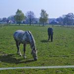 Ambiente Pferdekoppel II