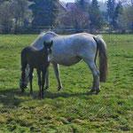 Ambiente Pferdekoppel IV
