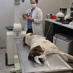 Lotta bei den Untersuchungen in der Tierklinik