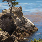 The Lone Cypress,  17 Miles Drive