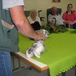 Na klar, ein junges Kaninchen.