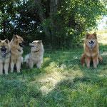 Avalon, Cardia, Ban, Alaska, Luna und Aaron