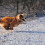 Ich renne für mein Leben gerne