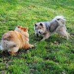 Asita und Alaska beim Spielen