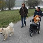 Romy mit Hundebuggy für Meggy
