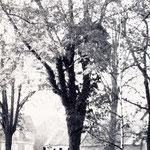 Nordwestlicher Teil des Friedhofs, Aufnahme von Karl Engel, Bad Nauheim, 1941