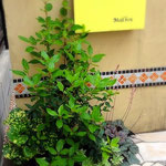 門廻り:植え込みから約1年後、植物が馴染んできています