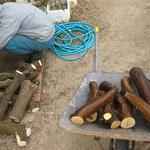 みかんの木や枝の汚れをきれいに洗う