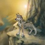 Wolf im Canyon 2012